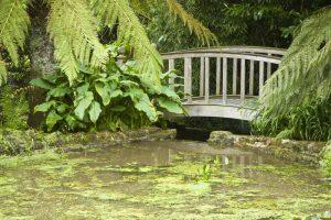 Trengwaiton Gardens, Penzance